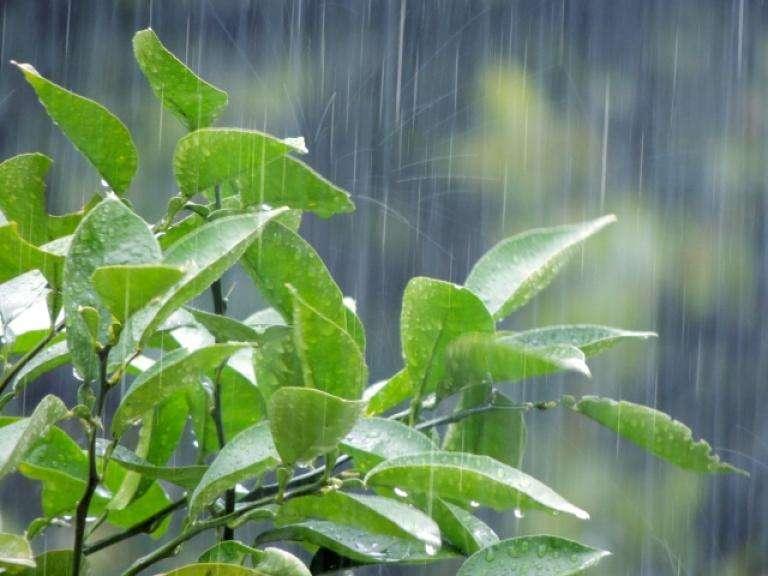 image 梅雨時期にピカピカの外壁。「雨で汚れが流れ落ちる外壁材」